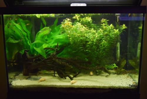 Guide to a planted tank